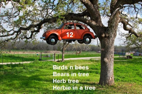 herbie ina tree